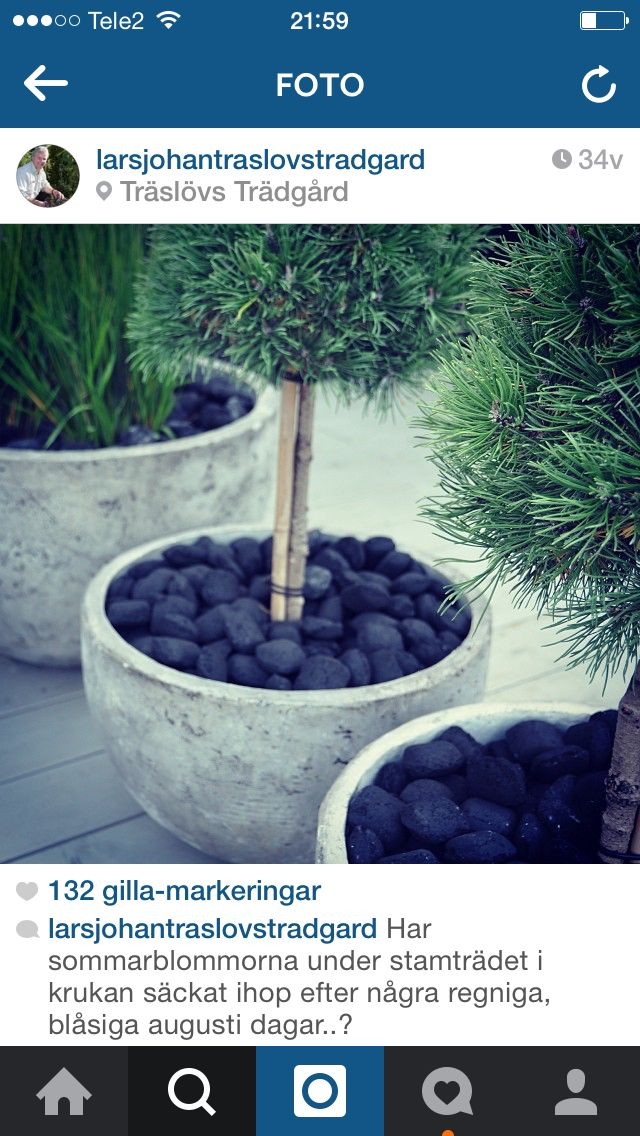 Grillkol i planteringen. Källa: Lars-Johan, Träslövs trädgård, Instagram