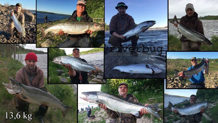 Happy RiverBug users from Finland. #riverbug #rivertube https://www.facebook.com/pg/river4ranger/photos/?tab=album&album_id=604503286372598 www.riverbug.fi
