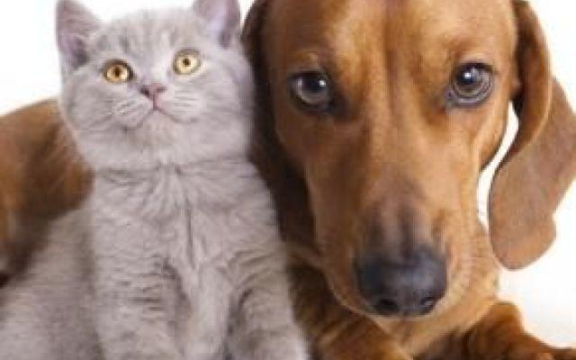 La Filaria nel cane e nel gatto, una malattia spesso mortale la filaria è una malattia del cane e del gatto trasmessa dal morso di una zanzara. La prevenzione è di vitale importanza per la salute del tuo amico a quattro zampe, infatti questa malattia se non cu #cani #gatti #filaria #filariosi