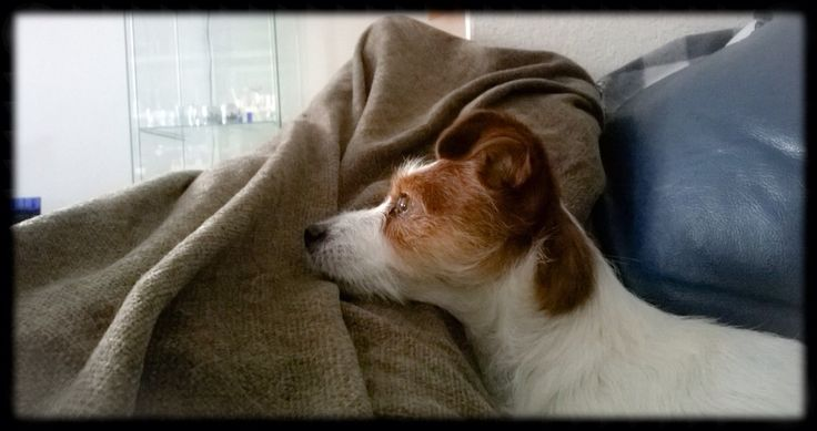 Watching over mommy, who is healing from some major surgery