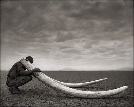 Ranger w/ Tusks of Killed Elephant, Amboseli 2011