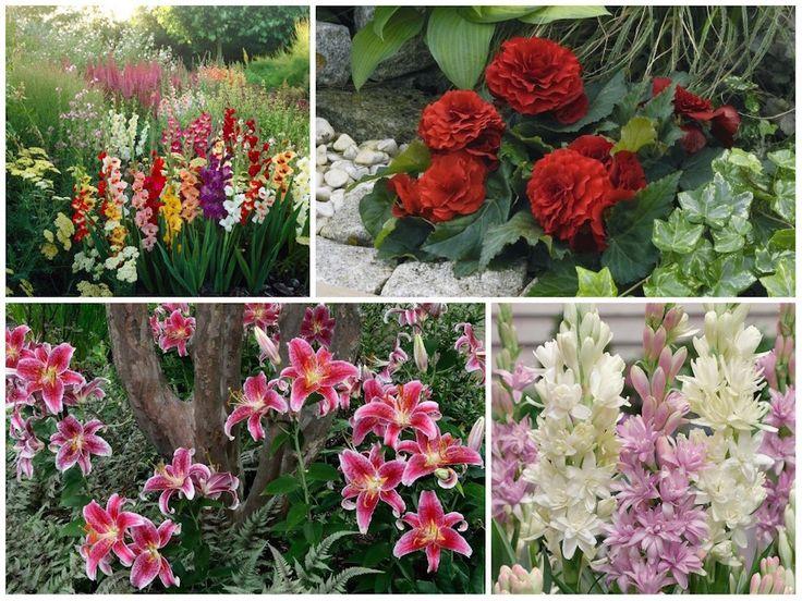 Milyen virágokat ültessünk áprilisban? Ha bámulatos kertre vágysz, van néhány tippünk!
