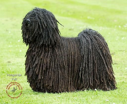 1000+ images about Dog Breeds I - Z on Pinterest