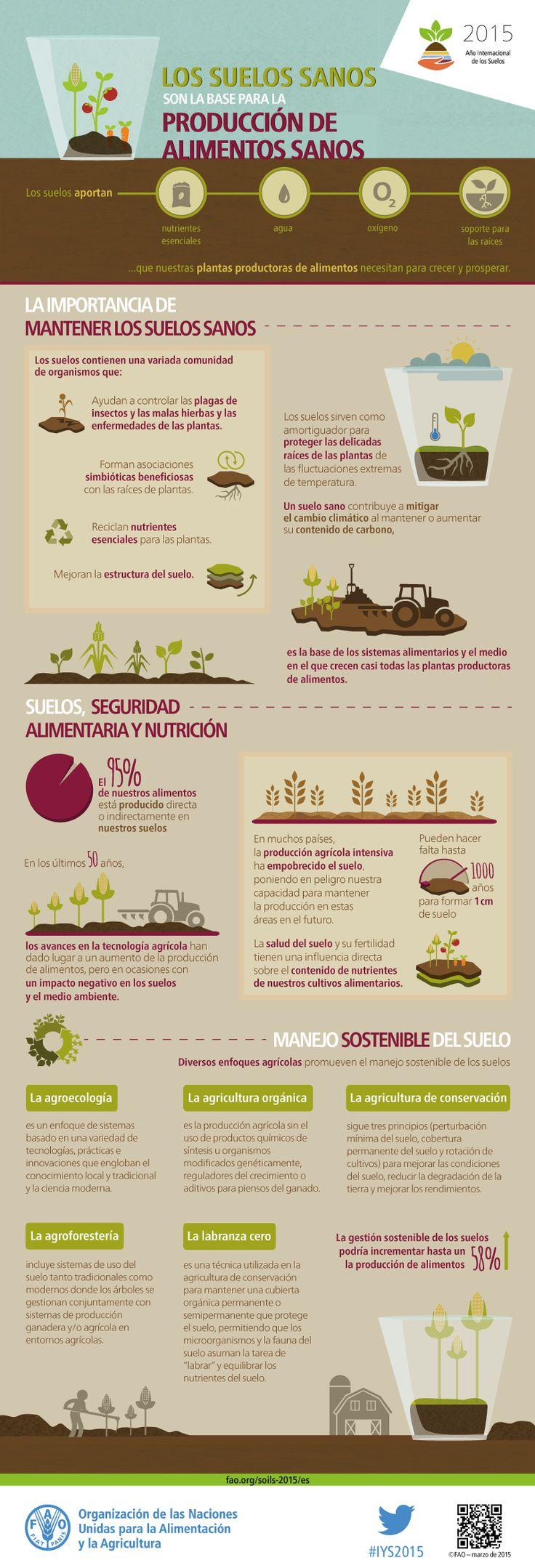 Infografía: Los suelos sanos son la base para la producción de alimentos saludables -  Los suelos sanos son el fundamento del sistema alimentario. Nuestros suelos son la base de la agricultura y el medio en el que crecen casi todas las plantas destinadas a la producción de alimentos. Los suelos sanos producen cultivos sanos que alimentan a las personas y a los animales. De hecho, la calidad de los suelos está directamente relacionada con la calidad y la cantidad de alimentos. - Fuente: FAO