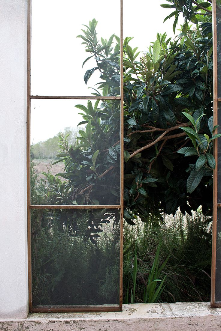 plants and big old metal windows