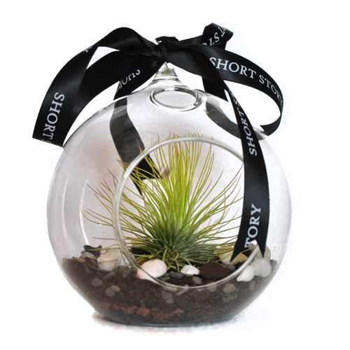 Life in a Bubble Love this idea of growing air plants in a glass bauble. You can hang inside your house, office, bedroom anywhere that needs a little greening up
