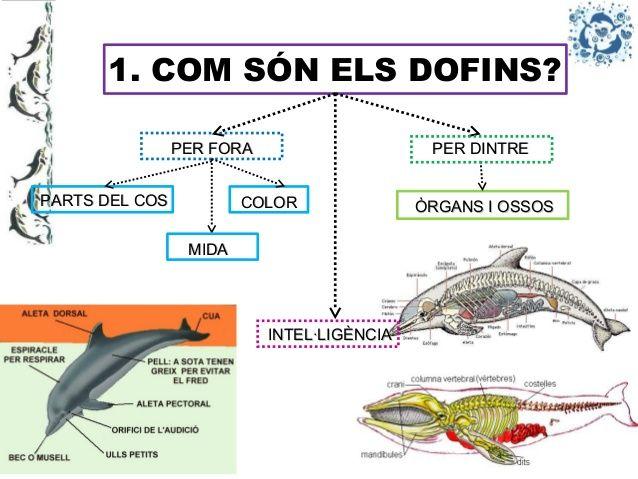 power-dofins-p5a-13-638.jpg (638×479)