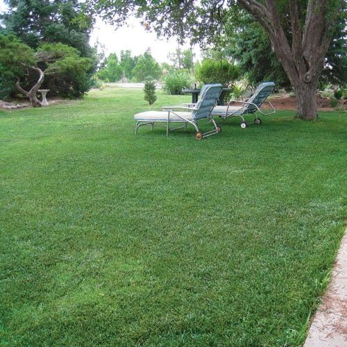 1000 images about patio lawn ideas on pinterest for Best low maintenance grass
