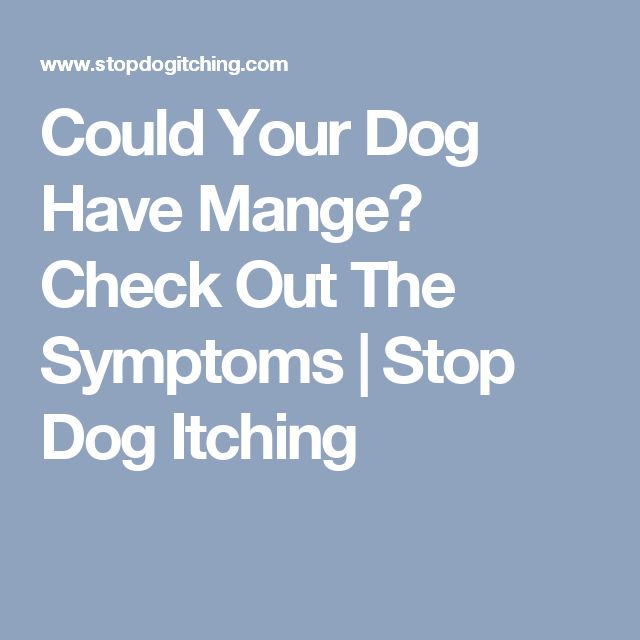 Could Your Dog Have Mange? Check Out The Symptoms | Stop Dog Itching