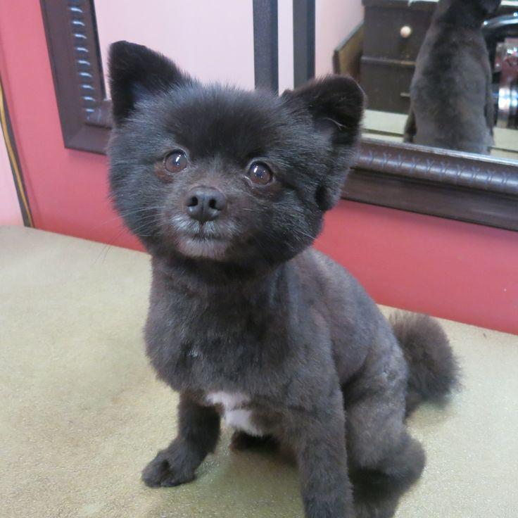 20 Best Bad Pet Hair Cuts Images On Pinterest Ha Ha
