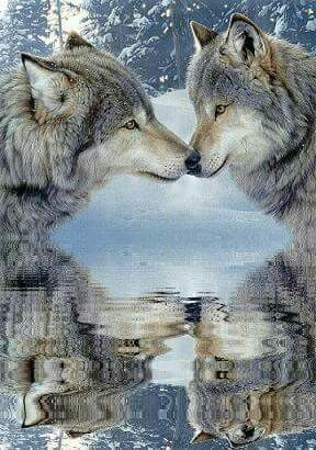 Wolves mate for life  Stop killing them and their pups ❤❤