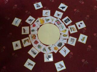 Montessori food chain - approche montessorienne de la chaîne alimentaire