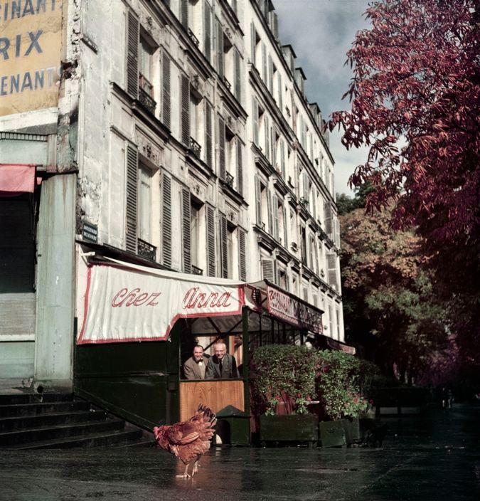 Robert Capa © International Center of Photography Paris. ca. 1952. Chicken outside restaurant Chez Anna....