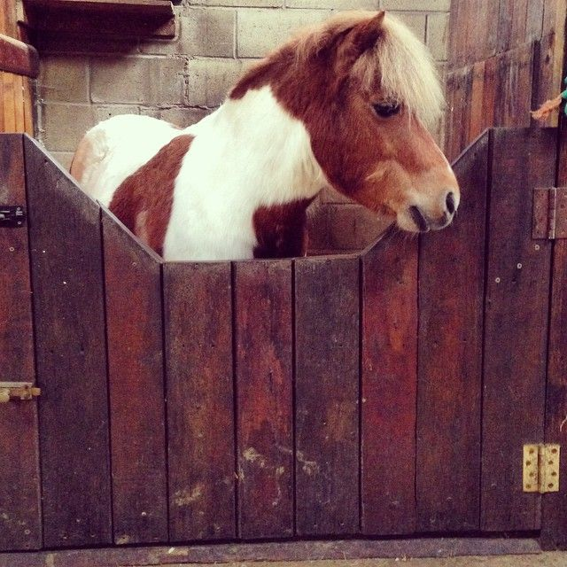 The pony everyone wanted to steal at our recent photo shoot #teddy #pony #cute #staroftheday