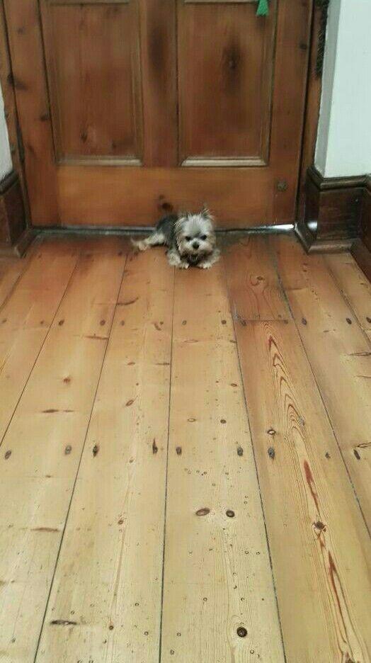 Leo guarding the house
