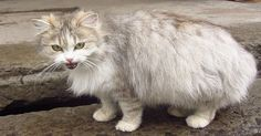 VIDEO: Heavily Pregnant Cat Cries Out To People On The Street to Be Fed And Then An Angel …