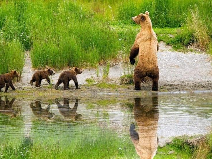 ayı yavruları