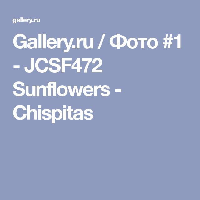 Gallery.ru / Фото #1 - JCSF472 Sunflowers - Chispitas