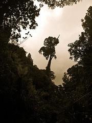 Rimutaka Forest Park, Wainuiomata