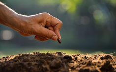Не знаете, как определить, когда пора сеять семена и высаживать рассаду? Воспользуйтесь этими народными приметами, которым следовали наши бабушки. Тогда семена дружно взойдут, и растения будут развиваться правильно. В разных регионах в одно и то же время наблюдается неодинаковая погода. Кроме того,