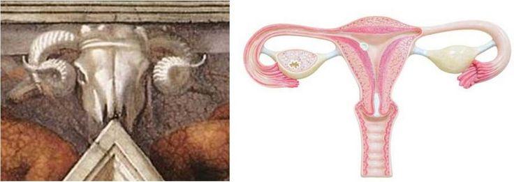 Volgens de Federal University of Health Sciences in Porto Alegre lijkt de kop van een ram zo sterk op de inwendige geslachtsorganen van de vrouw dat het geen toeval kan zijn.