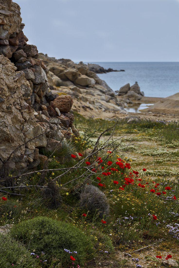 https://flic.kr/p/21hMCmj | Poppies | Mykonos, South Aegean, Greece