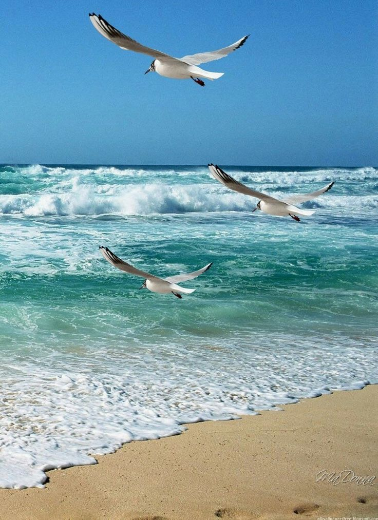 картинки море чайки вертикальные чуть соленой воде