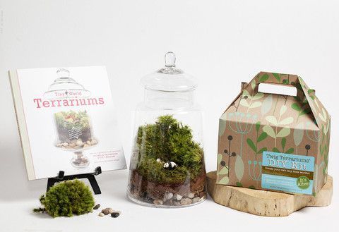 Jurassic in a Jar DIY Terrarium Kit by Twig Terrarium | Twig Terrariums