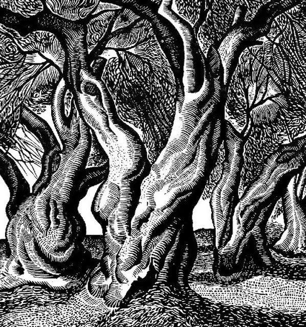 "''Olive Trees'' by Tassos .-""Ελιές "",Τάσσος 1965"