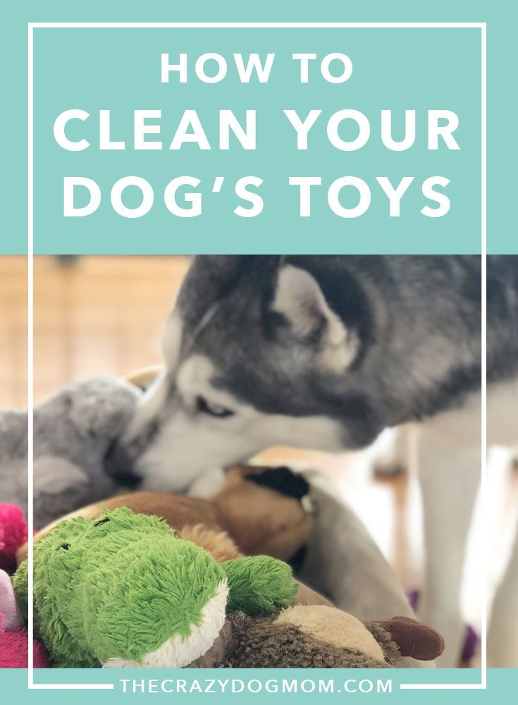How To Clean Your Dog S Toys Your Dog Dog Toys Dogs