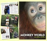 Monkey World Ape Rescue Centre Dorset UK