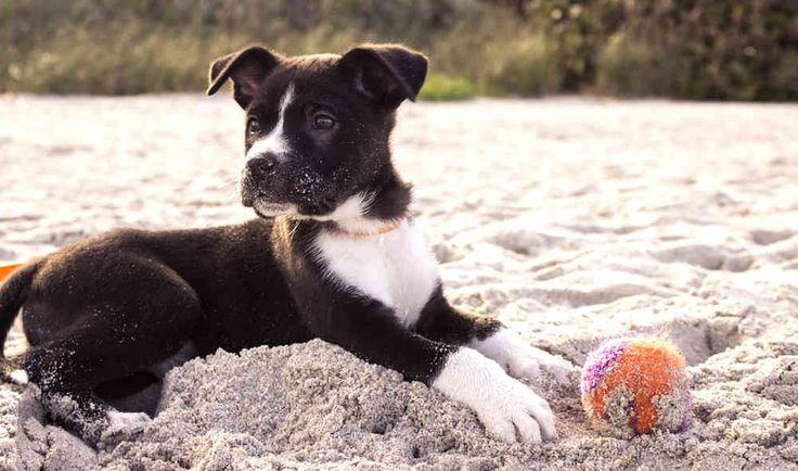 Ecco l'elenco dei campeggi dove sono ammessi cani a Jesolo e dintorni. Passa una vacanza in campeggio col cane senza problemi, da loro sei il benvenuto.