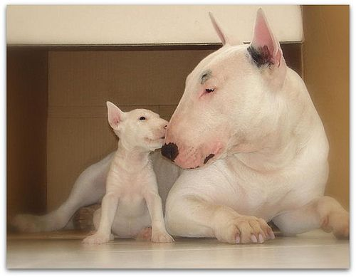 Aww Mom, you know i love you, but the other pups laugh at me if you cuddle me.
