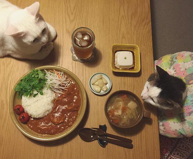 記念すべき初盛りは〜 パッチャンに席譲ってもらってwバターチキンカレー♩何気にバターチキンカレー自分でちゃんと作るの初めてかもしれん…。 そして簡単なのにオイヒ〜!! 今日 @sioge さんから届いたお皿は、実際に盛るとやっぱりサイズがちょうどイイ♩本当によいお皿をありがと〜◡̈⃝❤︎ #バターチキンカレー #益子焼  #八おこめ #ねこ部 #cat #ねこ #八おこめ食べ物 #カレー