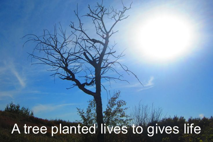 Plant a tree because it counts https://sites.google.com/site/onedaywithdiabetes/plant-a-tree