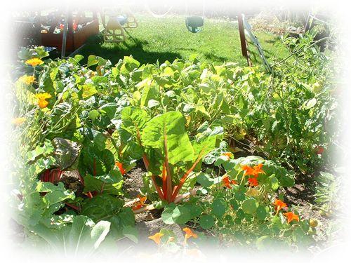 Mi Jardinera Jardineras de madera para cultivar hortalizas y medicinales