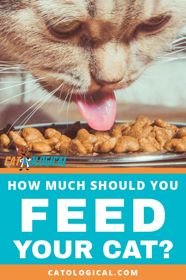 Learn How Much To Feed Your Cat Based On Its Age And Size This Is Important Cat Info That You Need To Know In Why Do Cats Purr Cat Feeding
