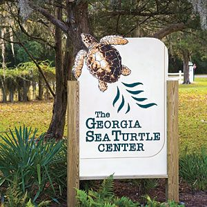 Five Reasons To Visit Jekyll Island | Georgia Sea Turtle Center | SouthernLiving.com