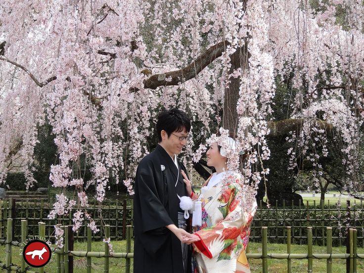 Beautiful #wedding at #kyoto during sakura Joli #mariage à Kyoto pendant les #sakura