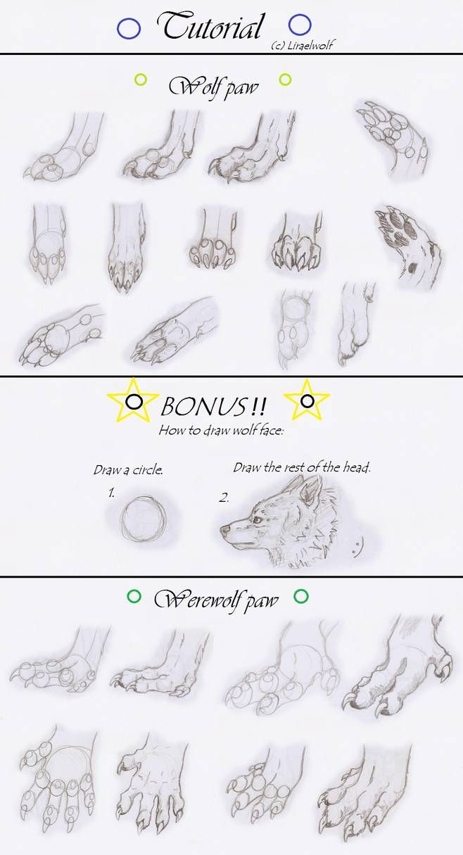 Paws Tutorial By Liraelwolf Paw Drawing Wolf Drawing Canine Art