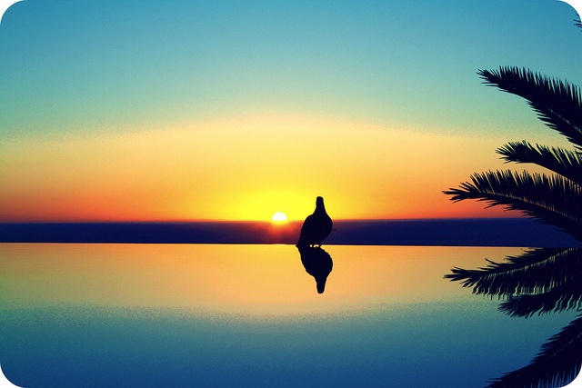 bird sunset - bantry bay, cape town, south africa