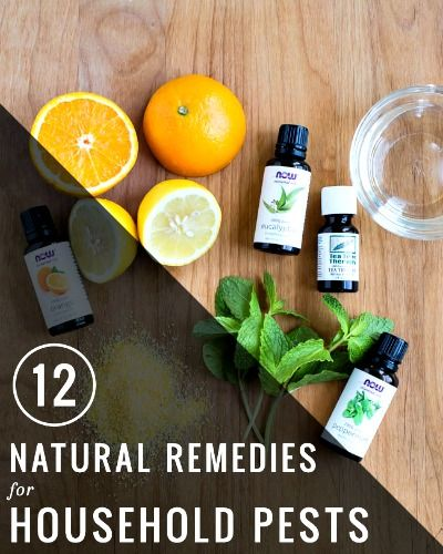12 Natural Remedies for Household Pests