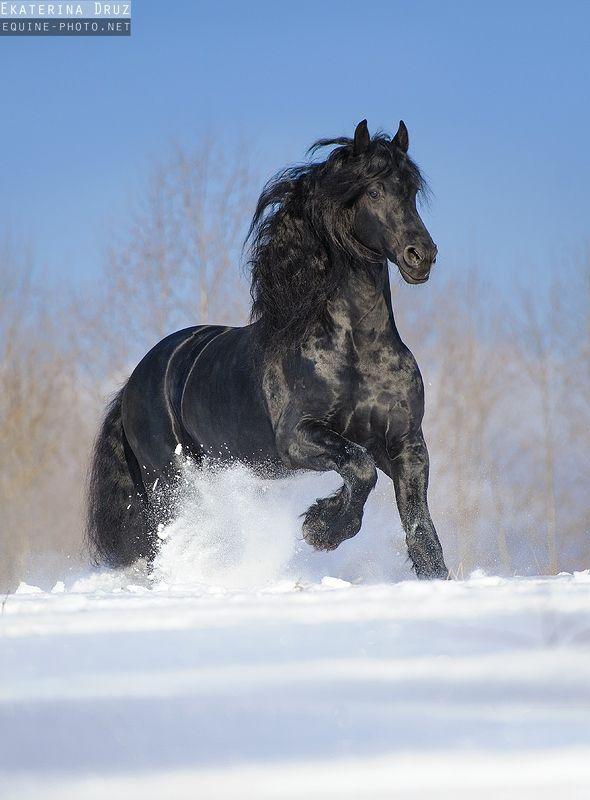 Зима 2012-2013 - Фотографии Лошадей Екатерины Друзь