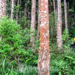 Jalur Pendakian Argopuro Masih Ditutup