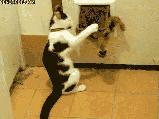 Git Dafuq Outta Here. | 20 Funny Cat GIFs