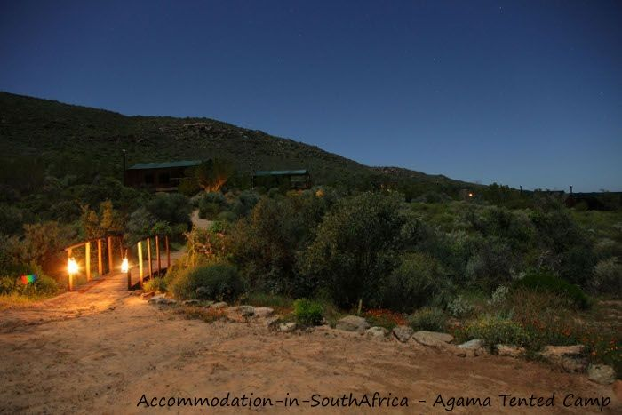 Accommodation in Namaqualand. Feel the tranquility at Agama Tented Camp. Accommodation at Agama Tented Camp Namaqualand. Namaqualand accommodation. Camping accommodation Namaqualand.