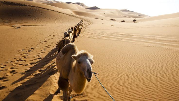 Wielbłądy, Pustynia, Karawana