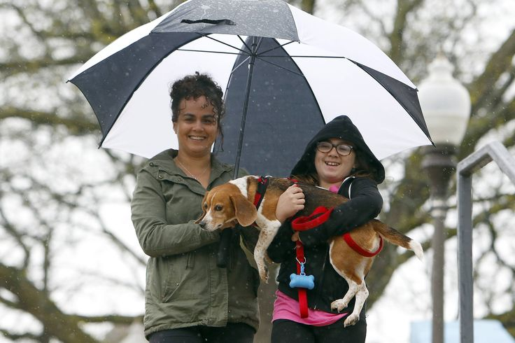 Tiffani Forsberg of Elgin and her daughter Sophia, 12, carry their reluctant beagle Shelby to the Elgin Pet Expo Saturday where people could learn about pet health and safety, meet pet groomers, pet food suppliers, trainers and more at the Hemmens Cultural Center.