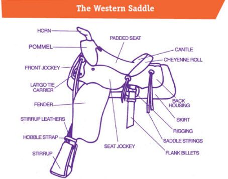 29 best camp images on pinterest horses horse and horse camp discover horses for kids western saddle quiz ccuart Images