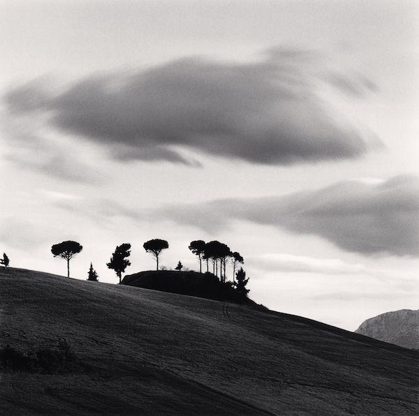 Michael Kenna- Pine trees at dusk